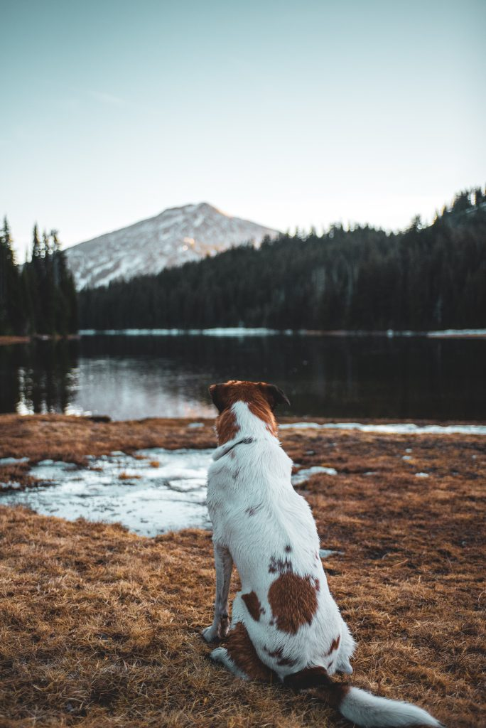 prepare for camping with your dog