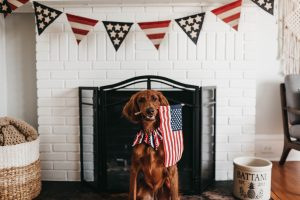 Tips to prepare your dog for 4th of July.