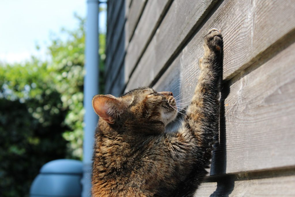 Why Your Cat Scratches Your Furniture And How You Can Stop It