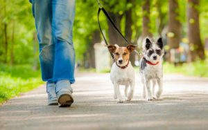 Dog Walking and Socialization is essential for your dog's wellbeing!