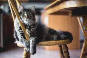 Entertain-Your-Cat-With-New-Cat-Furniture