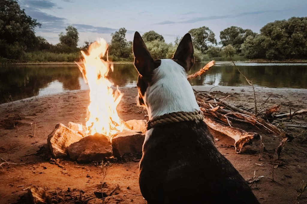 go camping with your dog