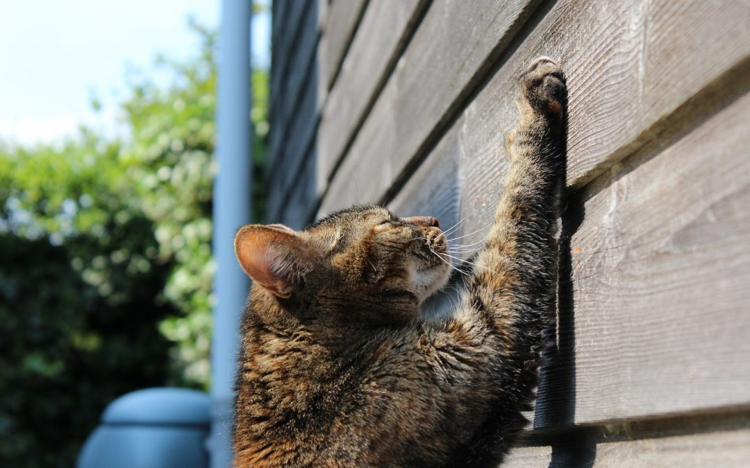 Why Your Cat Scratches Your Furniture And How To Stop It
