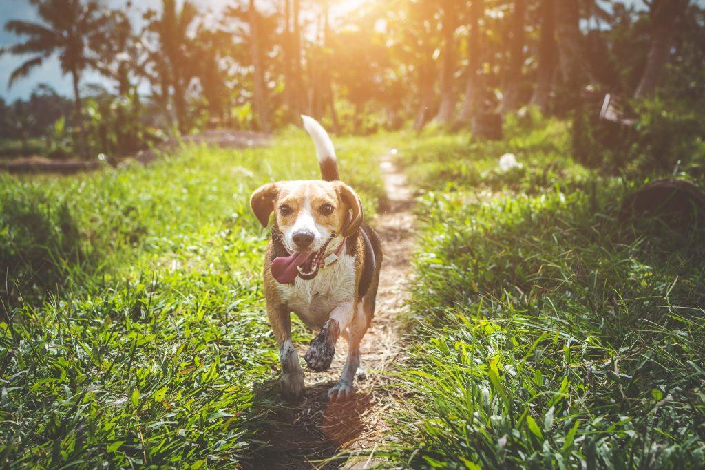 Austin dog parks Red Bud Isle Norwood Estate Park Zilker Park
